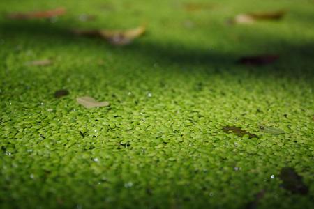 Una mattina all 39 orto botanico ladri di ricetteladri di for Lenticchie d acqua