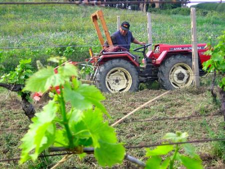 vino del contadino